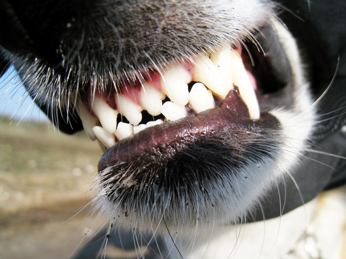 image of dog showing its teeth